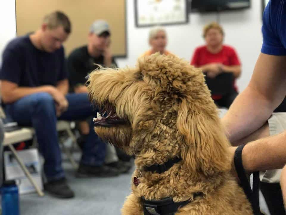 school for dog trainers behavior clinic evaluation