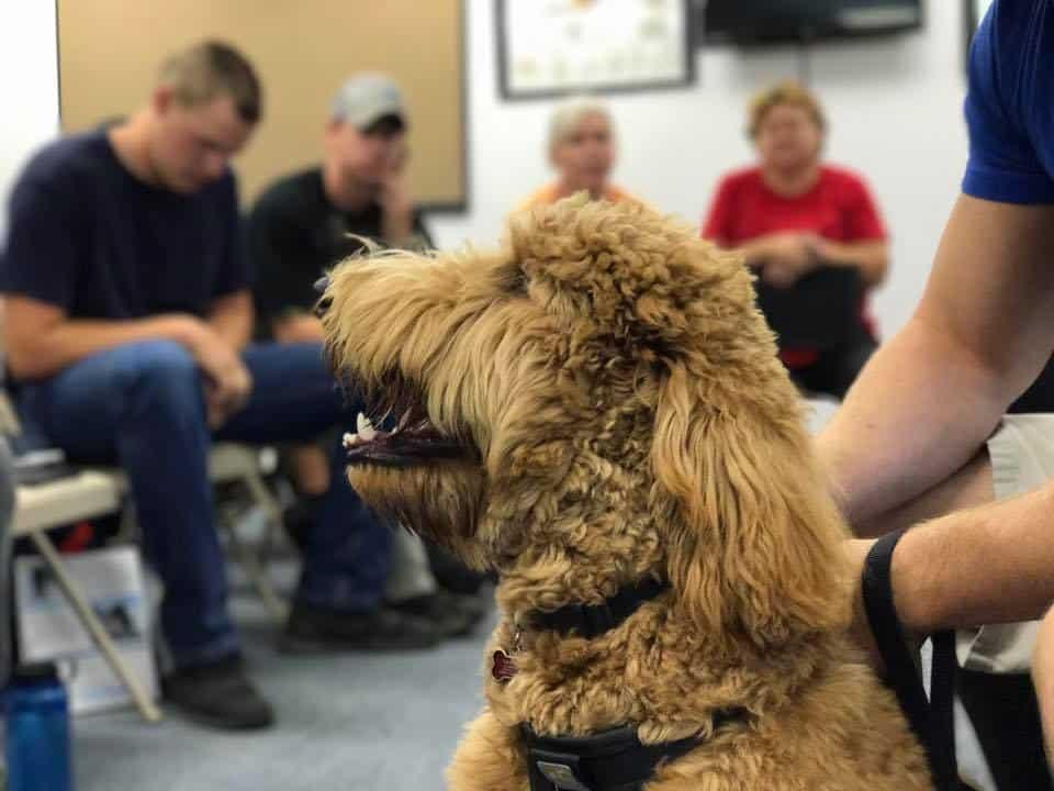 Protection Dog Training North Carolina