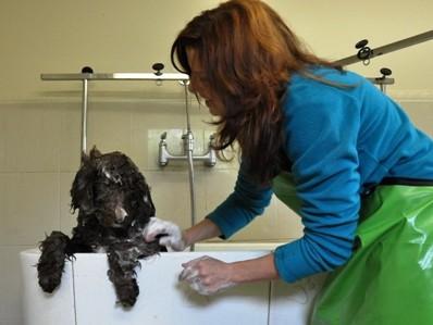 dog grooming suite