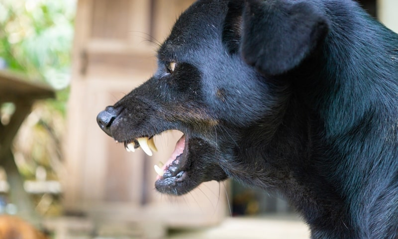 behavior dog training alabama