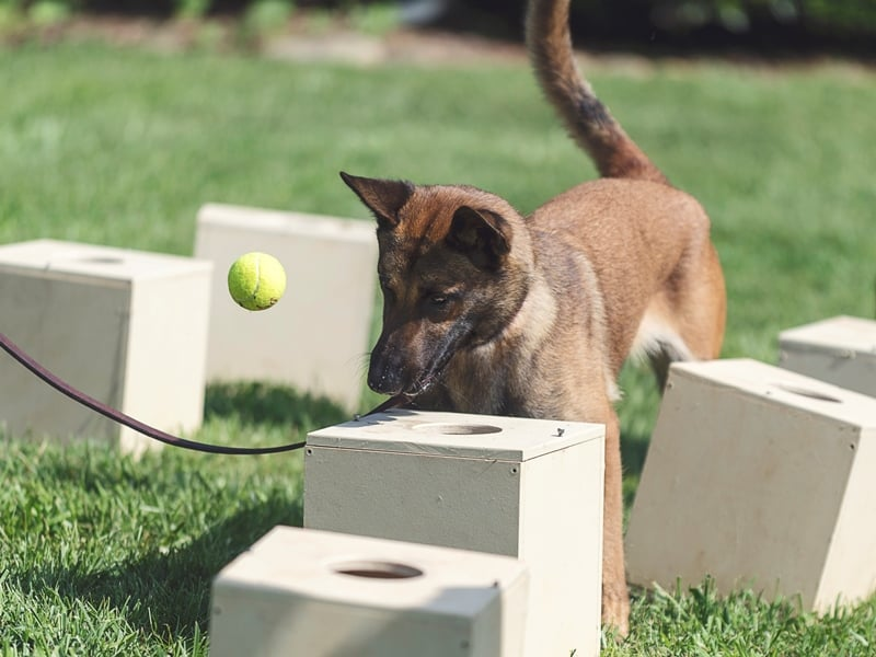 better police k9 training