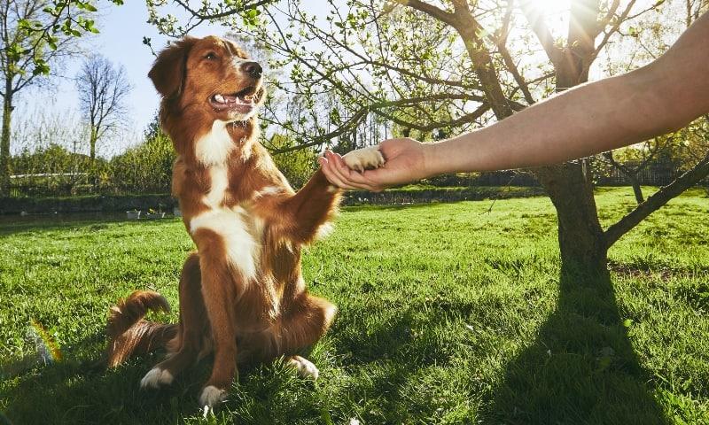 dog training group class