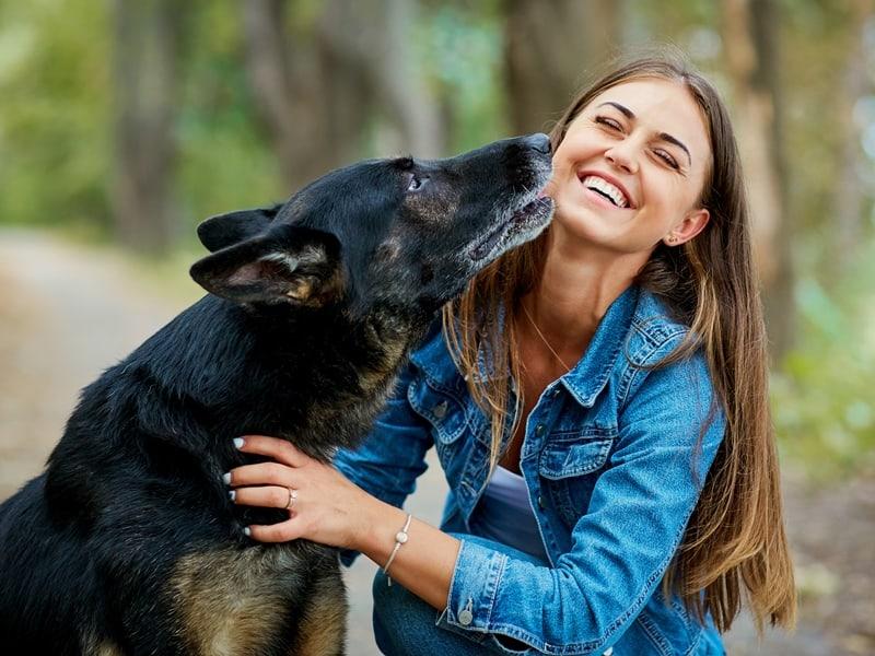 expert dog training services