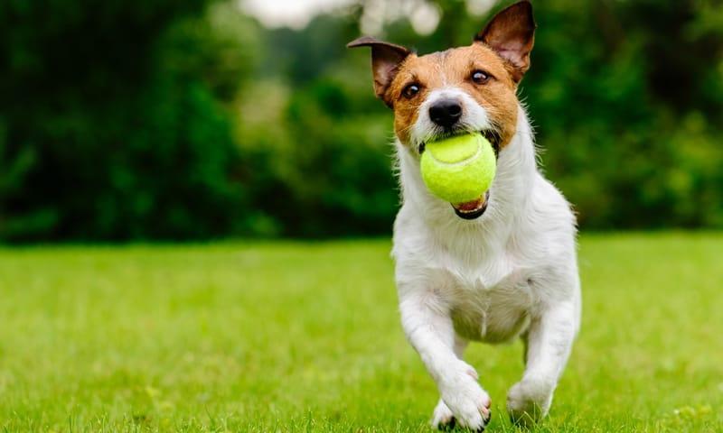in kennel dog training alabama