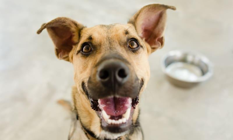 in kennel dog training