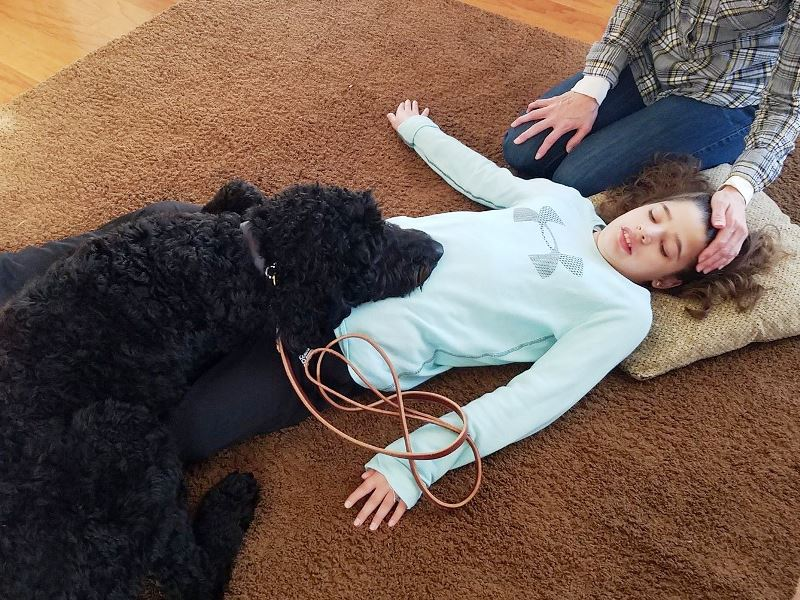 seizure service dogs