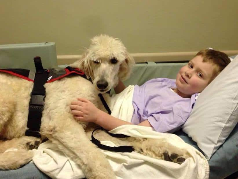 service dog with boy hospital