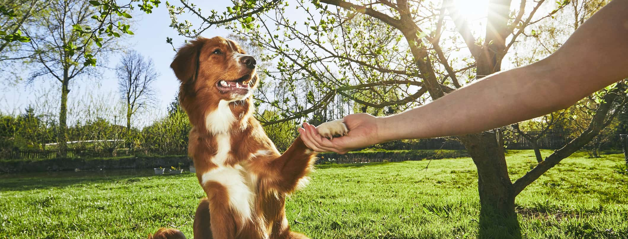 major benefits of dog training