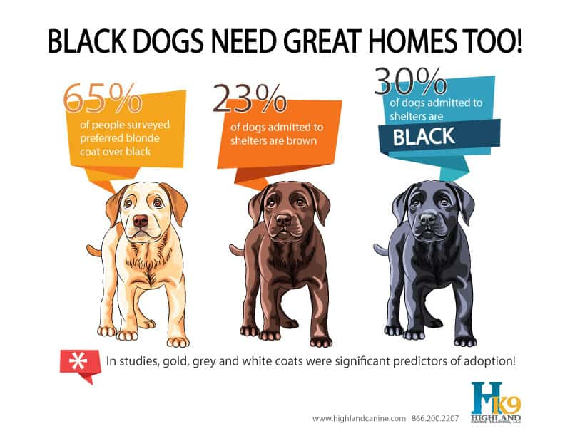 black dog syndrome infographic