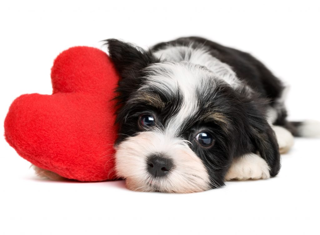 why your dog is a better valentine