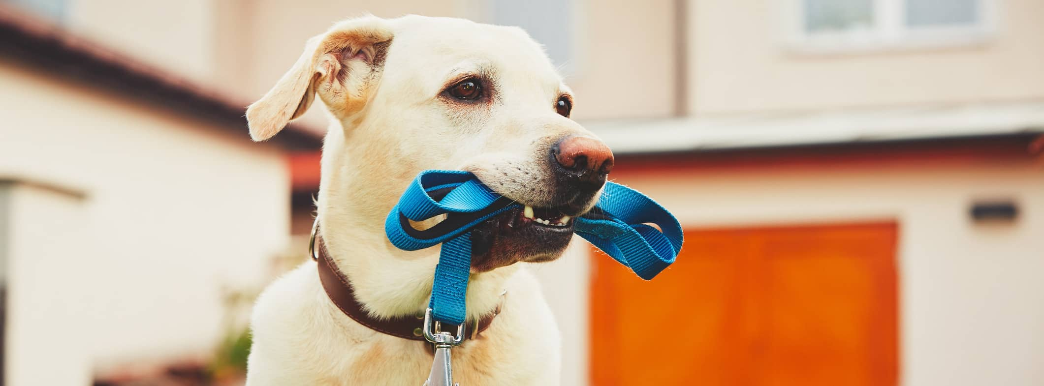 mental stimulation for your dog