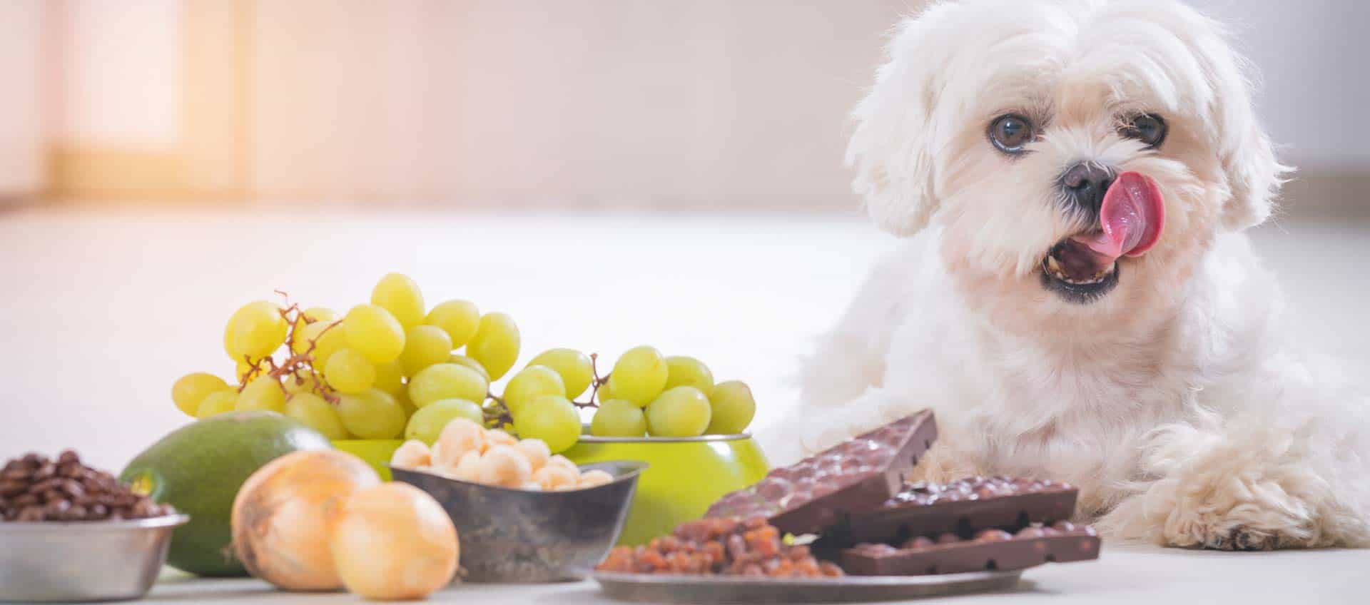 Six Foods Your Dog Must Never Eat
