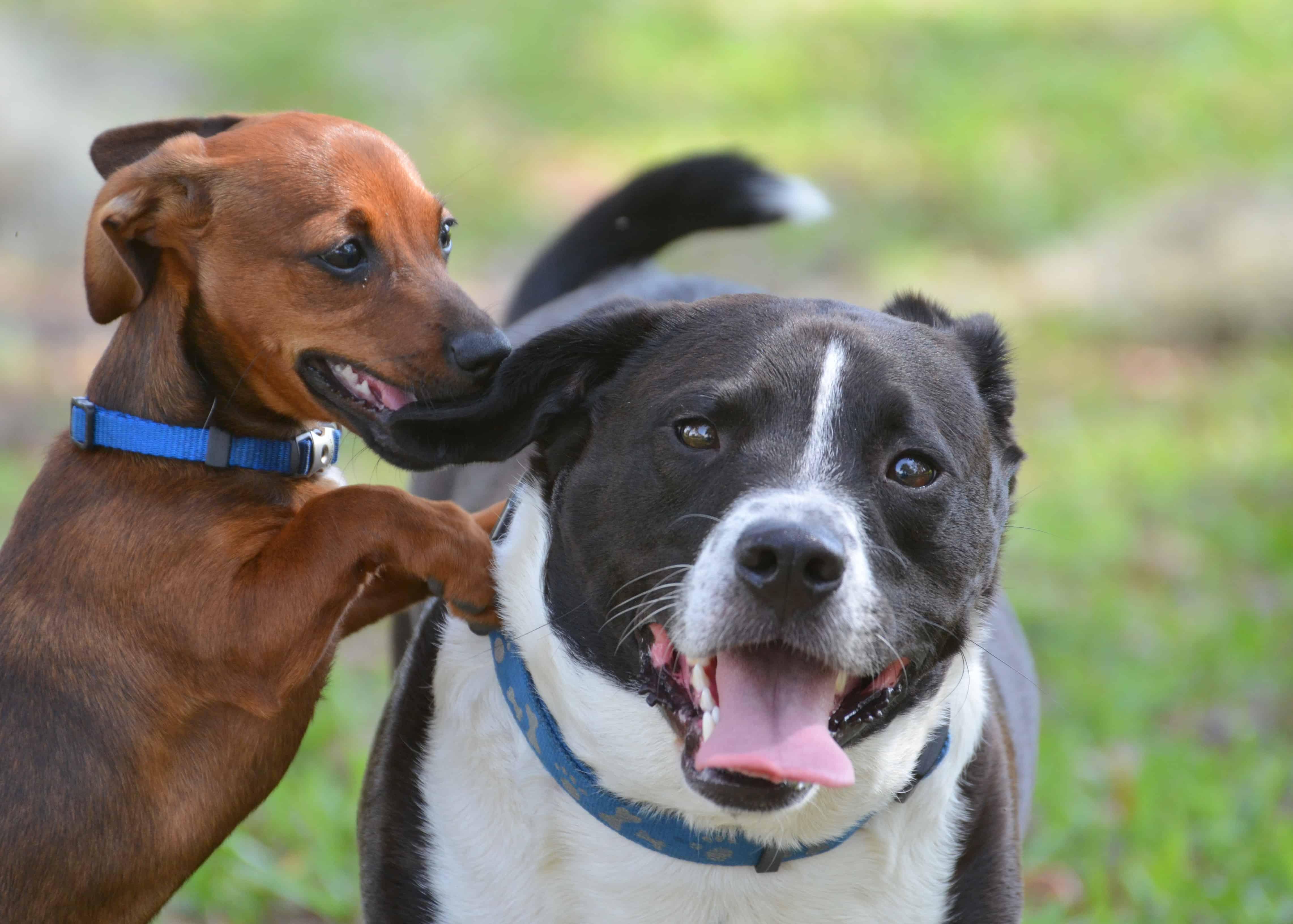 dog bullying