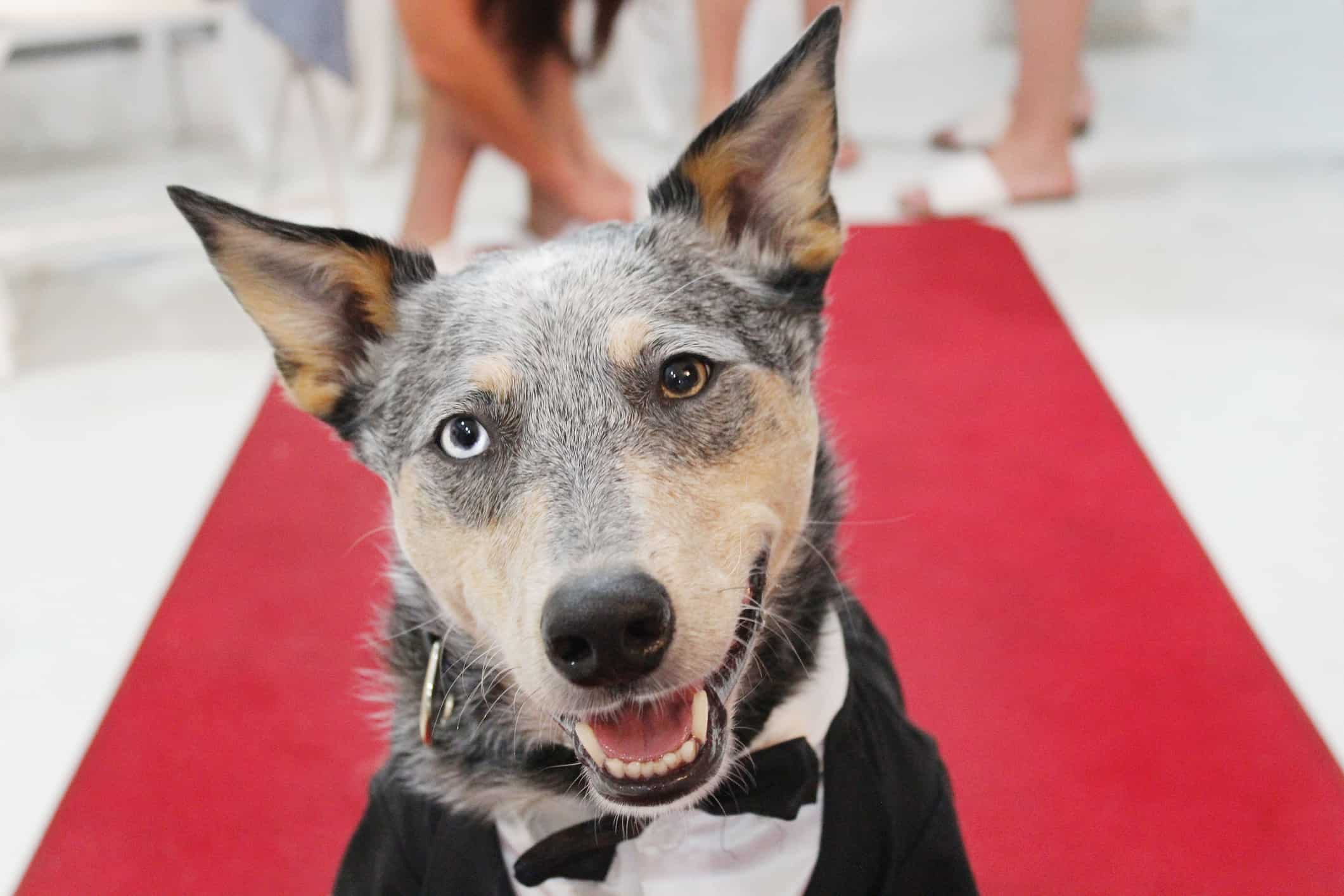 mixed breed dog on red carpet