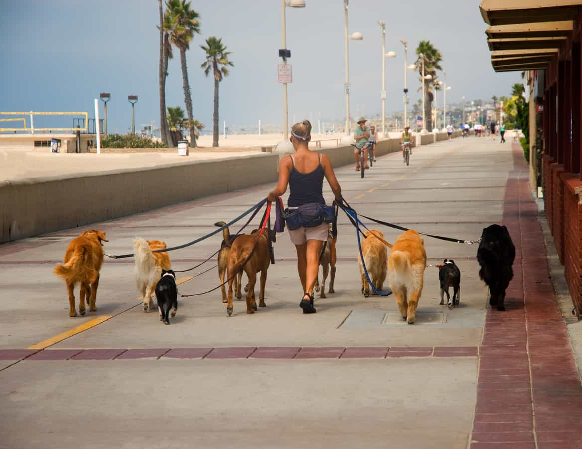 dogs being walked in public