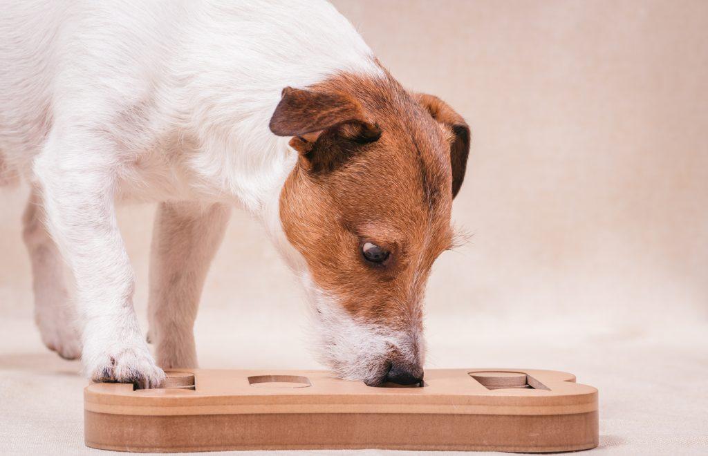 dog playing mental stimulation game