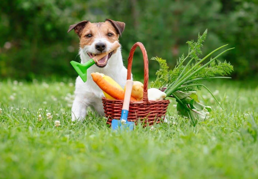 dog with veggies