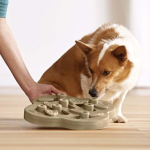 nina ottosson puzzle toy for dogs