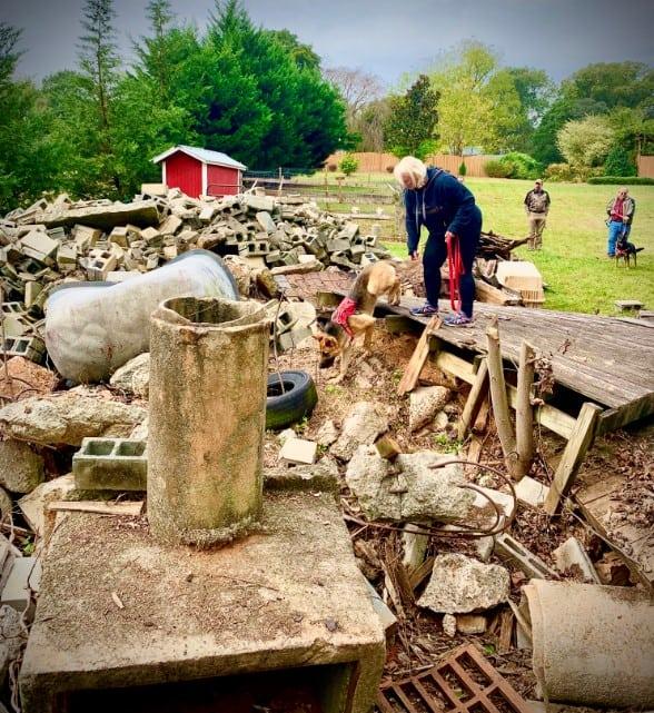 dog on rubble pile