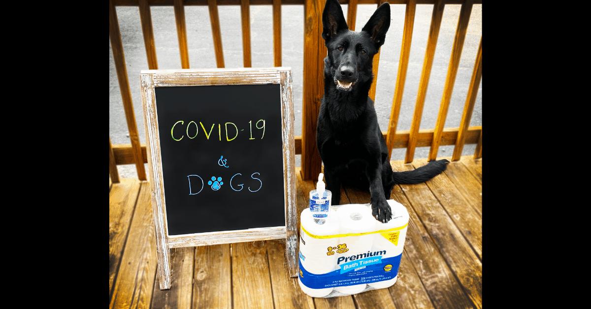 covid 19 coronavirus and dogs