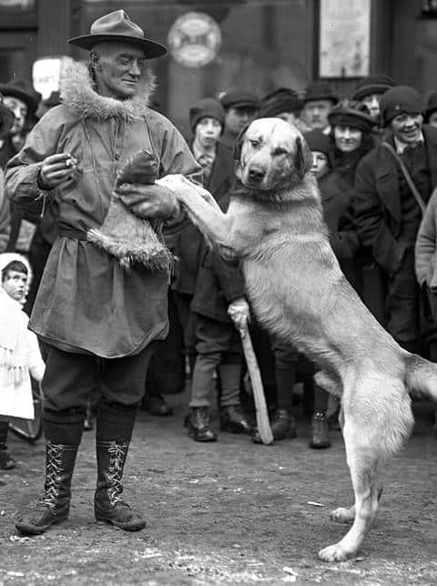 arthur t walden with chinook dog