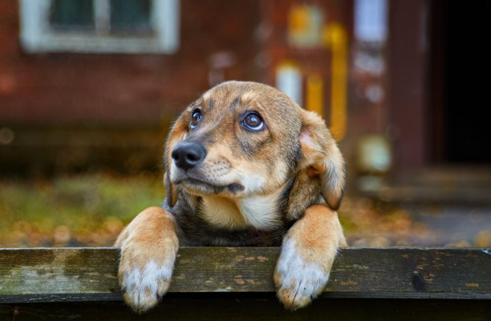 brown stray puppy
