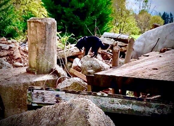 sar dog on rubble pile