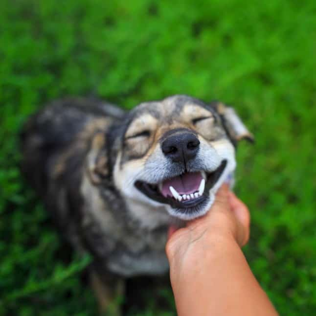 happy dog being praised