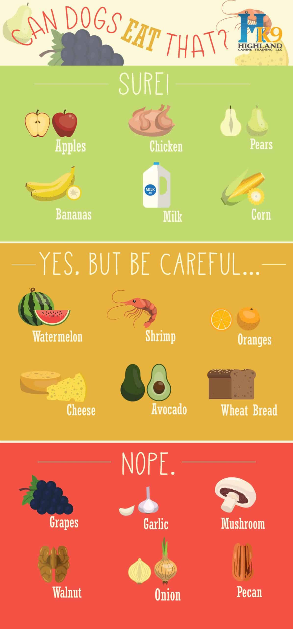 safe foods for dogs infographic