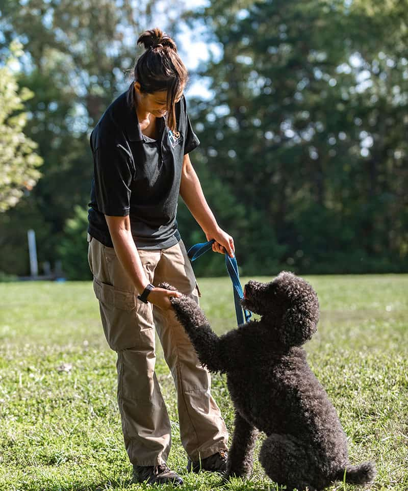 lori lopez dog training tucson