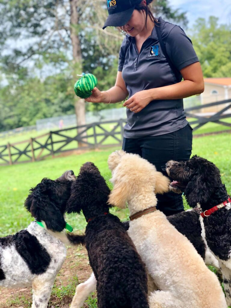brandi wallwork training dogs