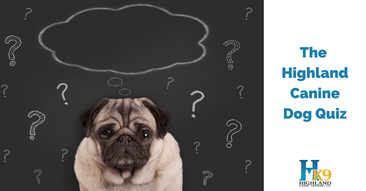 highland canine dog quiz