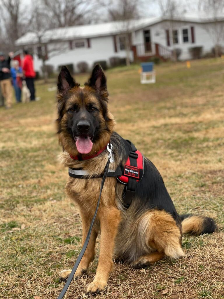 delilah german shepherd ready for sar trail