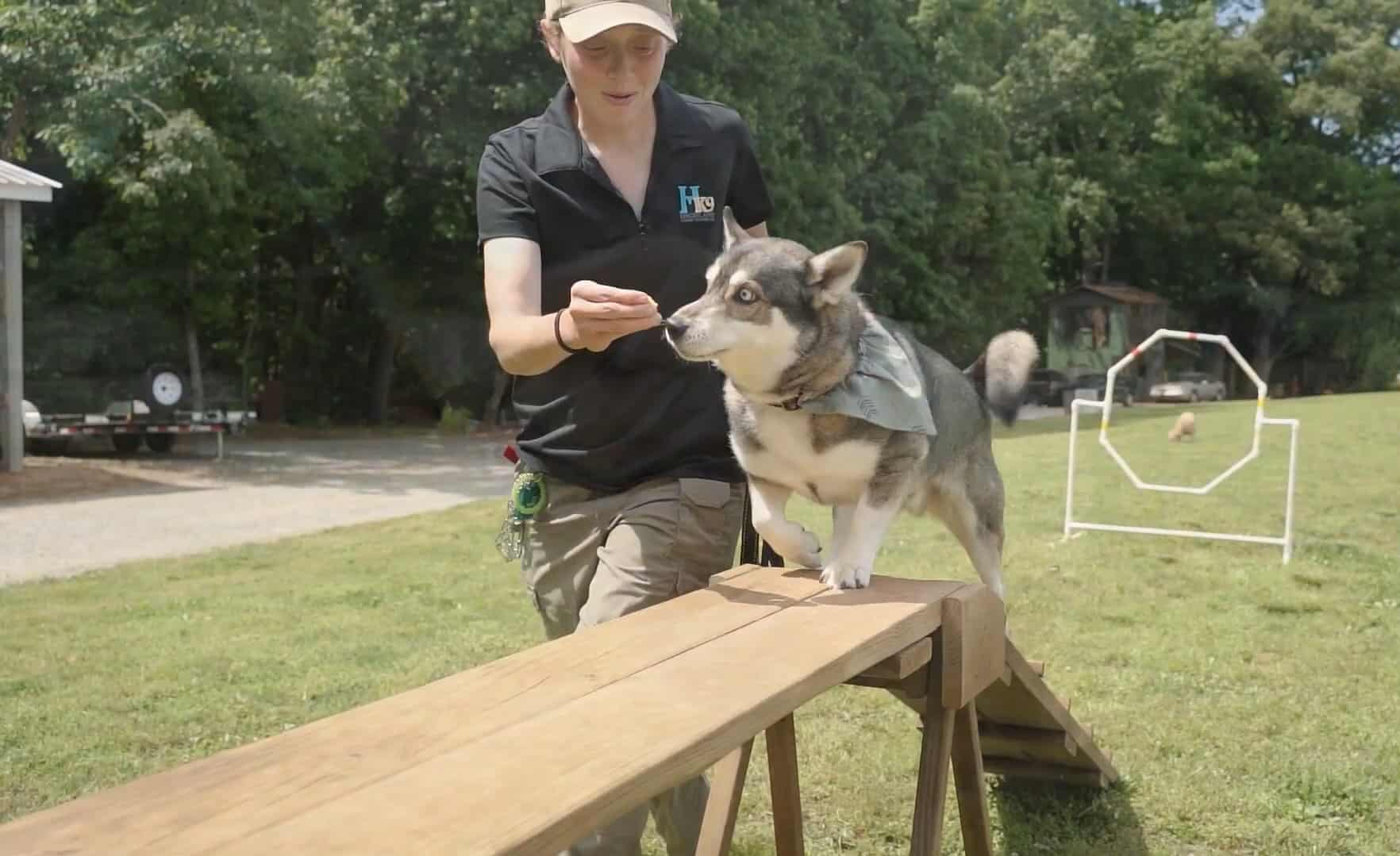 highland canine scranton