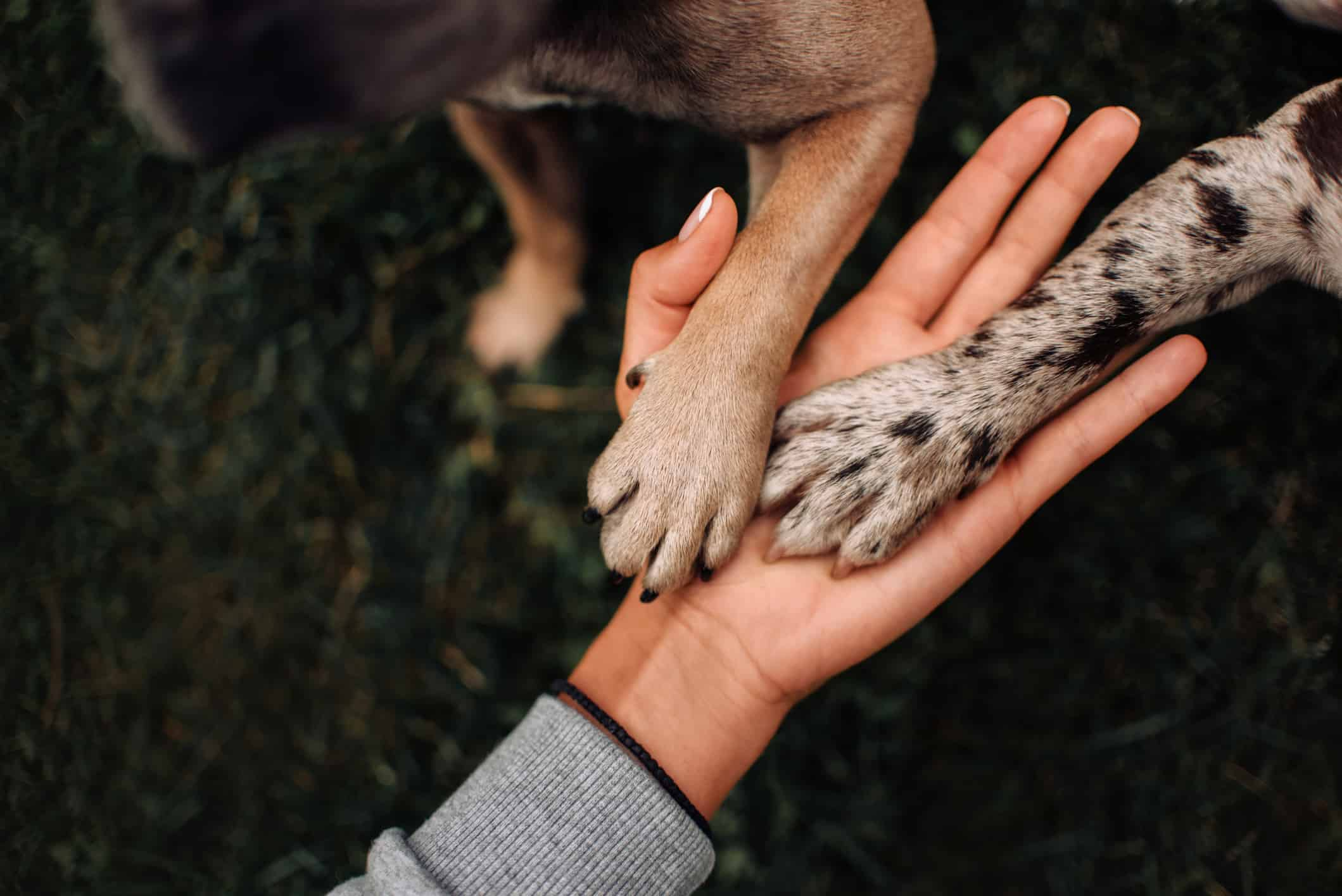 dog owner with dog paws in their hand